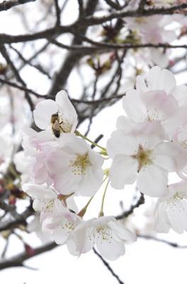 20080503020058-blossom.jpg